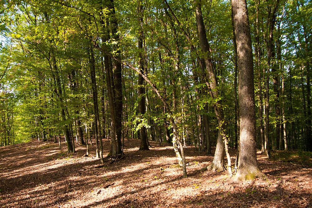 21. ožujka obilježava se Međunarodni dan šuma