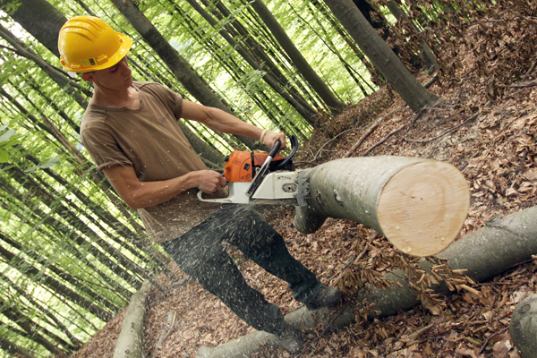 Objavljeni Natječaji za šumarsku tehnologiju, modernizaciju strojeva, preradu drveta…