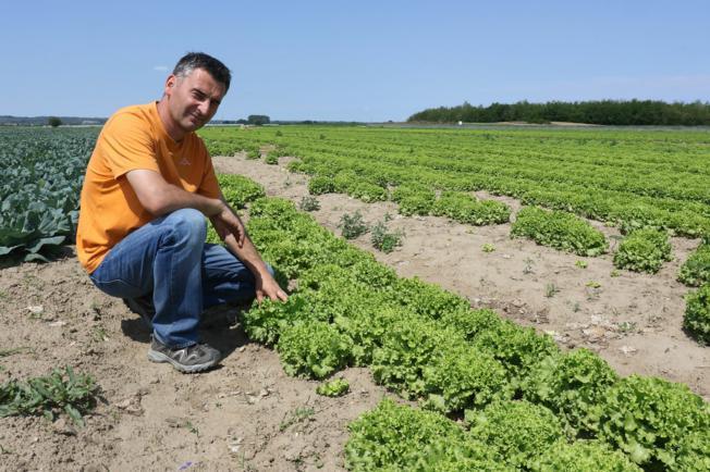 Jesu li naši proizvođači konkurentni: Voće iz Srbije jeftinije je jer koriste pesticide koji su zabranjeni u EU