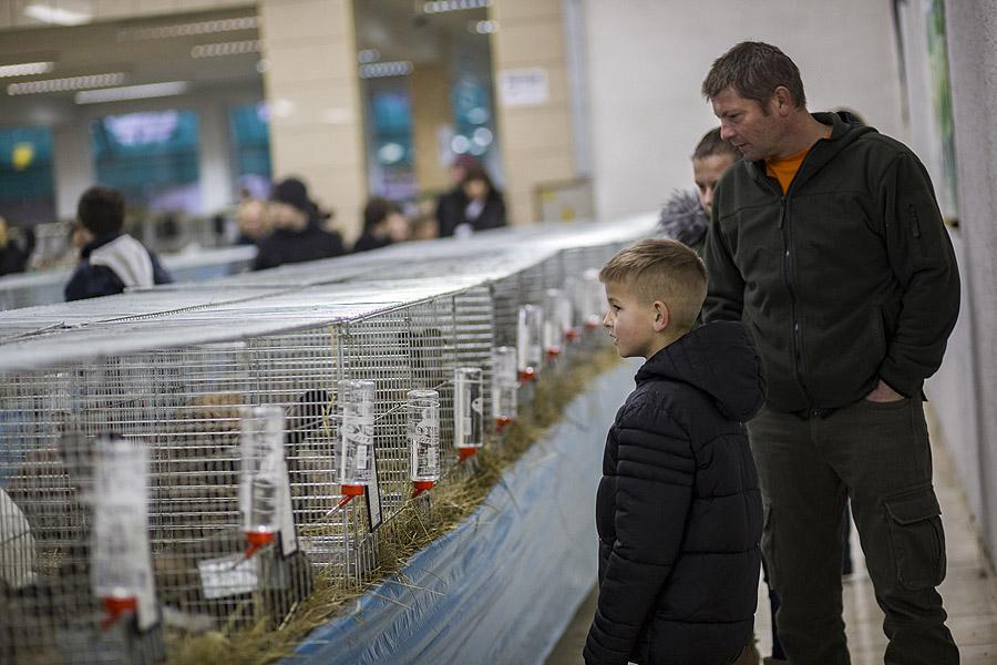 """Zamjenik župana Marijo Klement, otvorio je 43. """"Izložbu malih životinja"""" koja je otvorena do nedjelje kada se očekuje dolazak oko 2.000 posjetitelja"""