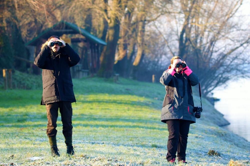 Zimskim prebrojavanjem ptica vodarica (IWC), na promatranim vodenim staništima, evidentirano je 13 vrsta ptica